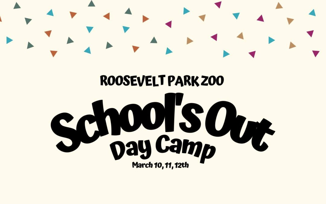March School's Out Day Camp